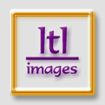 ltl images @ tlbtlb.com - the best in equine clipart